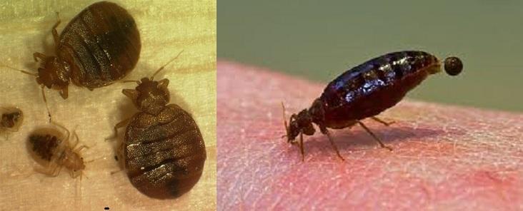 Pest Control Slogans